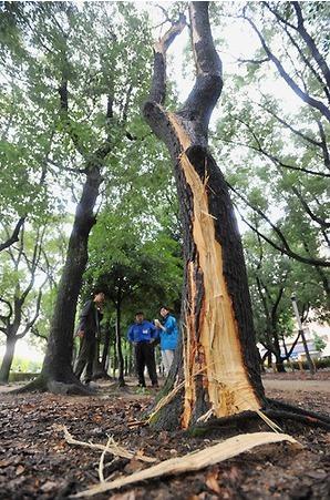 落雷で樹木が削り取られる